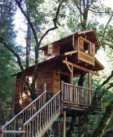 An Elevated Cabin Cool Tree Houses Tree House Designs