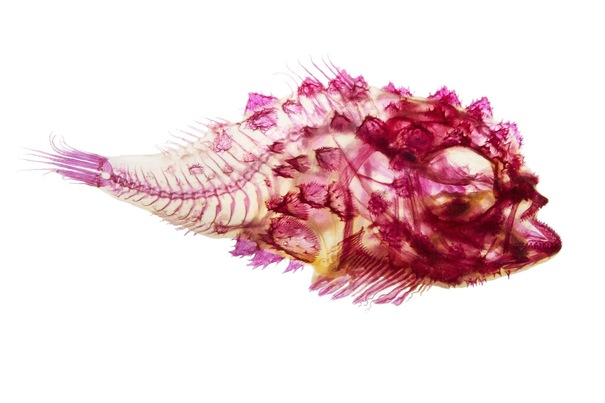 see-through-fish-02.jpg 2,048×1,365 pixels