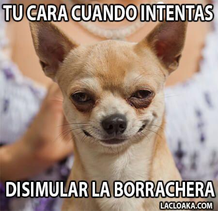 Memes De Borrachos Chistosos Para Descargar Memes De Borrachos Chistosos Borrachos Chistosos Chistes Borrachos