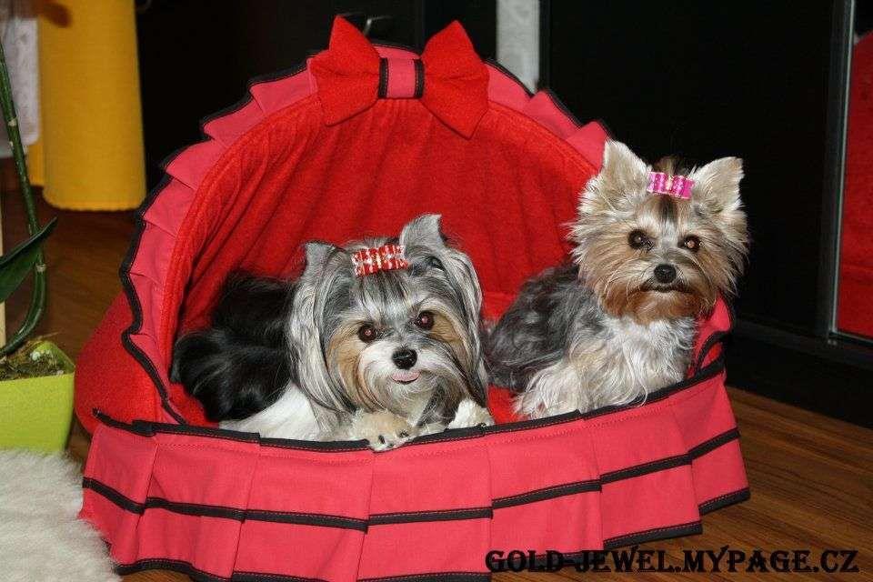 Cute Bed Yorkie Lovers Yorkie Yorkie Terrier