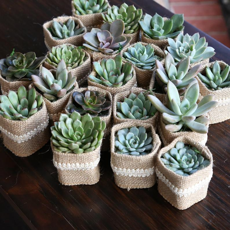 Succulent Wedding Favors with Personalized Tags Love Plant