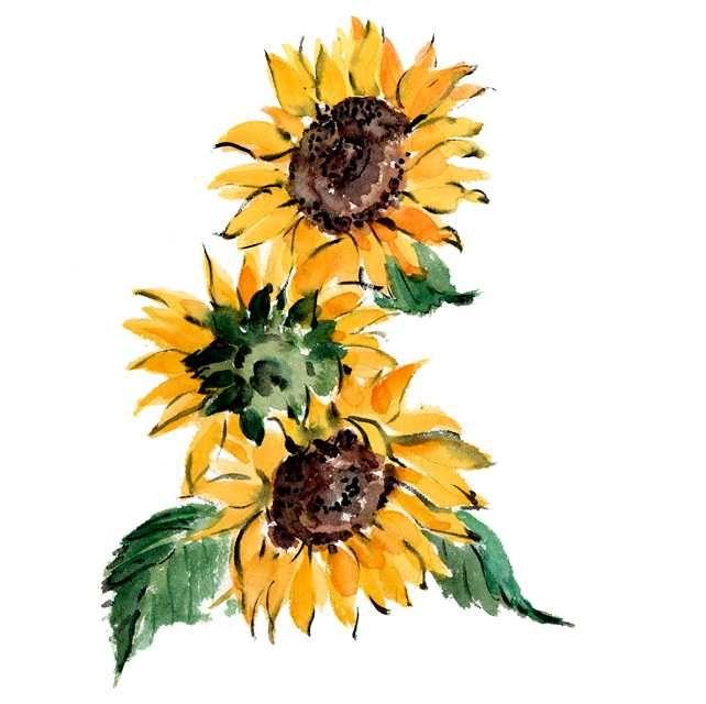 ひまわり,校庭,花,夏,植物,水彩画,イラスト,素材