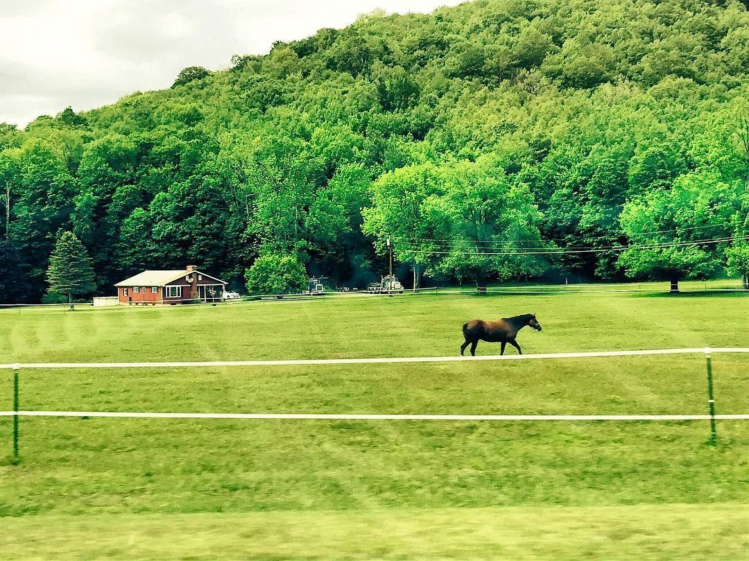 Berkshire pastures happy summer. #WaybackWednesday #horse #summer #wbw #Berkshires #Massachusetts #NewEngland