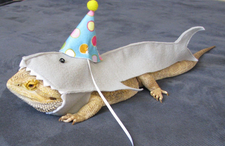 da143d643be Handmade Felt Bearded Dragon Great White Shark Birthday Hat Costume by  PamperedBeardies on Etsy