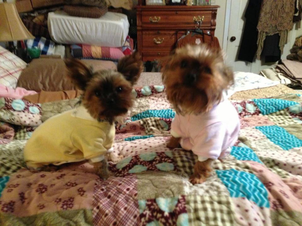 Teensie & Tinker healing comfortably in their Cover Me's