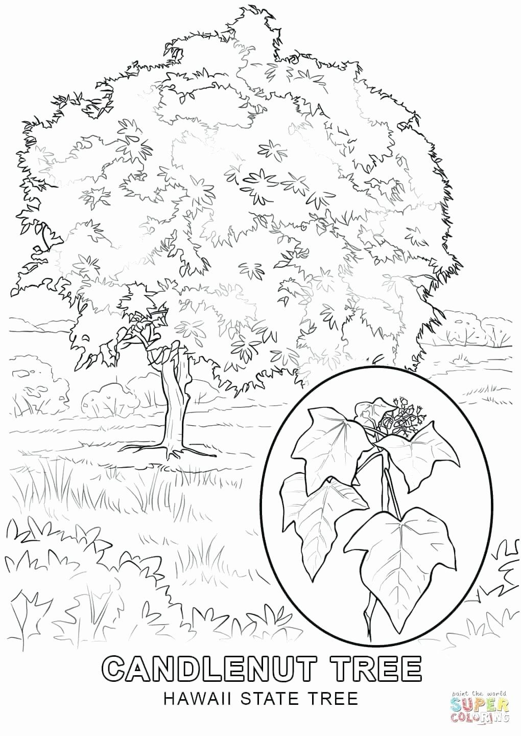Tree Coloring Pages Free Printable Luxury Hawaiian Coloring Page