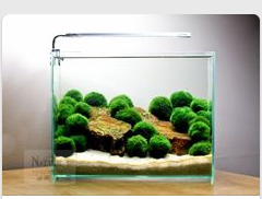 """Easy Aquascape Design With Marimo Moss Balls ̈˜ì¡±ê´€ ̕""""쿠아리움 ͅŒë¼ë¥¨"""