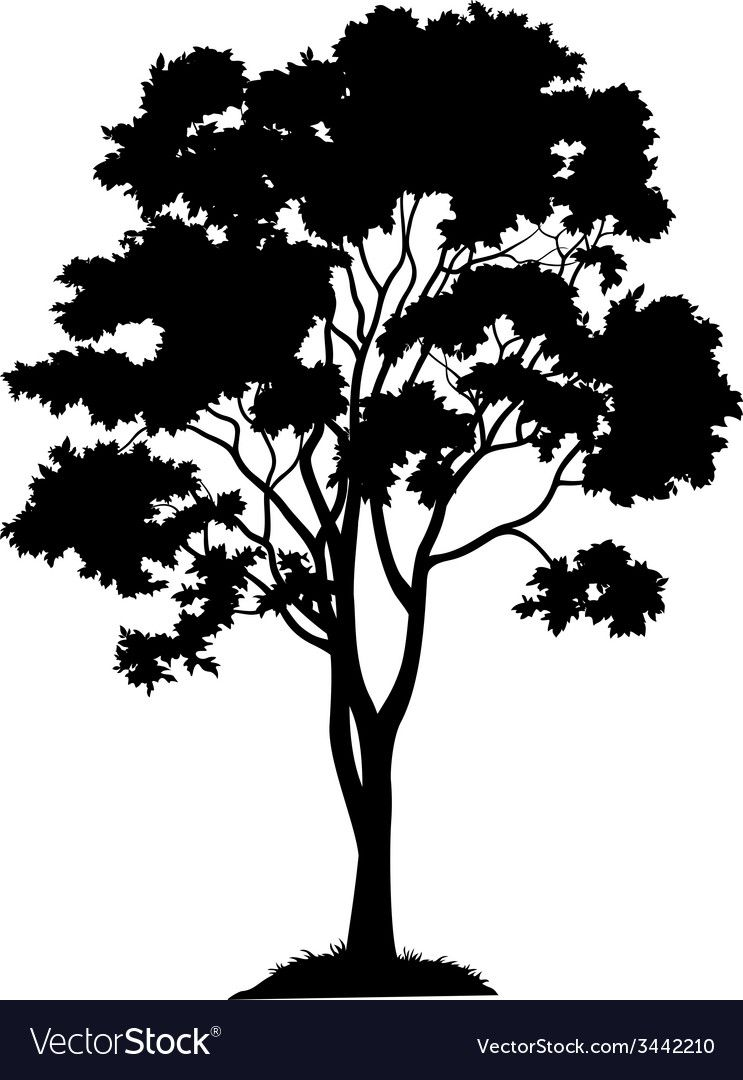 Maple Tree And Grass Silhouette Royalty Free Vector Image Aff Grass Silhouette Maple Tree Maple Tree Tattoos Grass Silhouette Tree Silhouette Tattoo