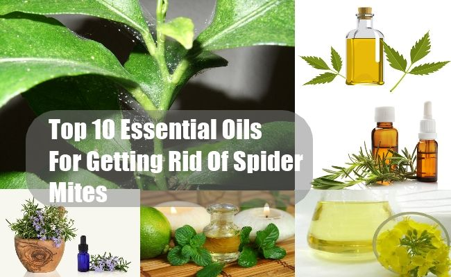 Diy find home remedies for Home remedies to get rid of spiders