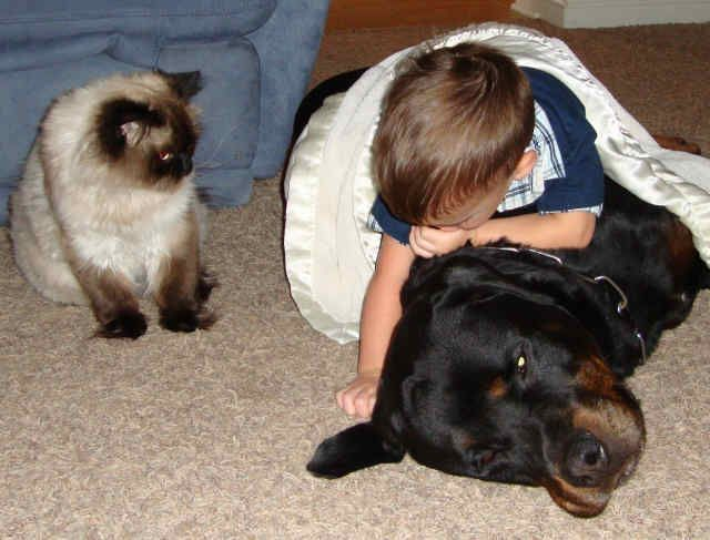 Guardian Rottweilers Loving Rotties Pinterest Rottweilers