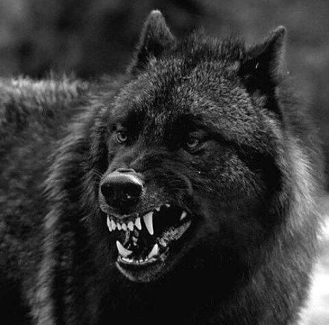 769 Curtidas 9 Comentários Loboswolf Forever
