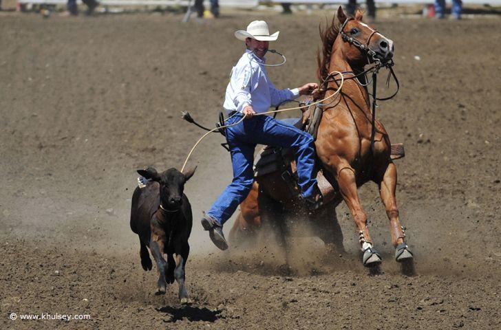 Re-Ride Quarter Horse Adoption Program - Home | Facebook