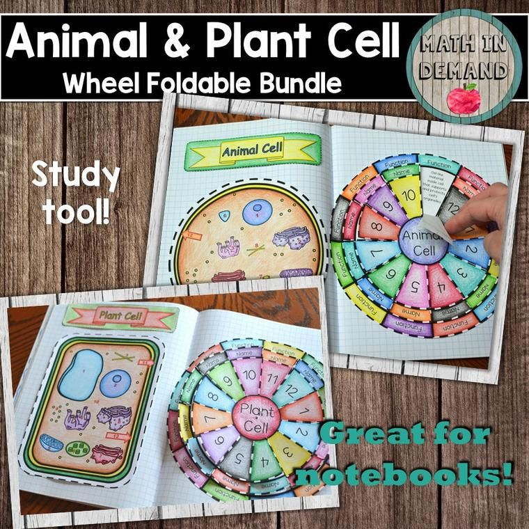 Mitosis Puzzle Activity | spanish class | Plant cell ...