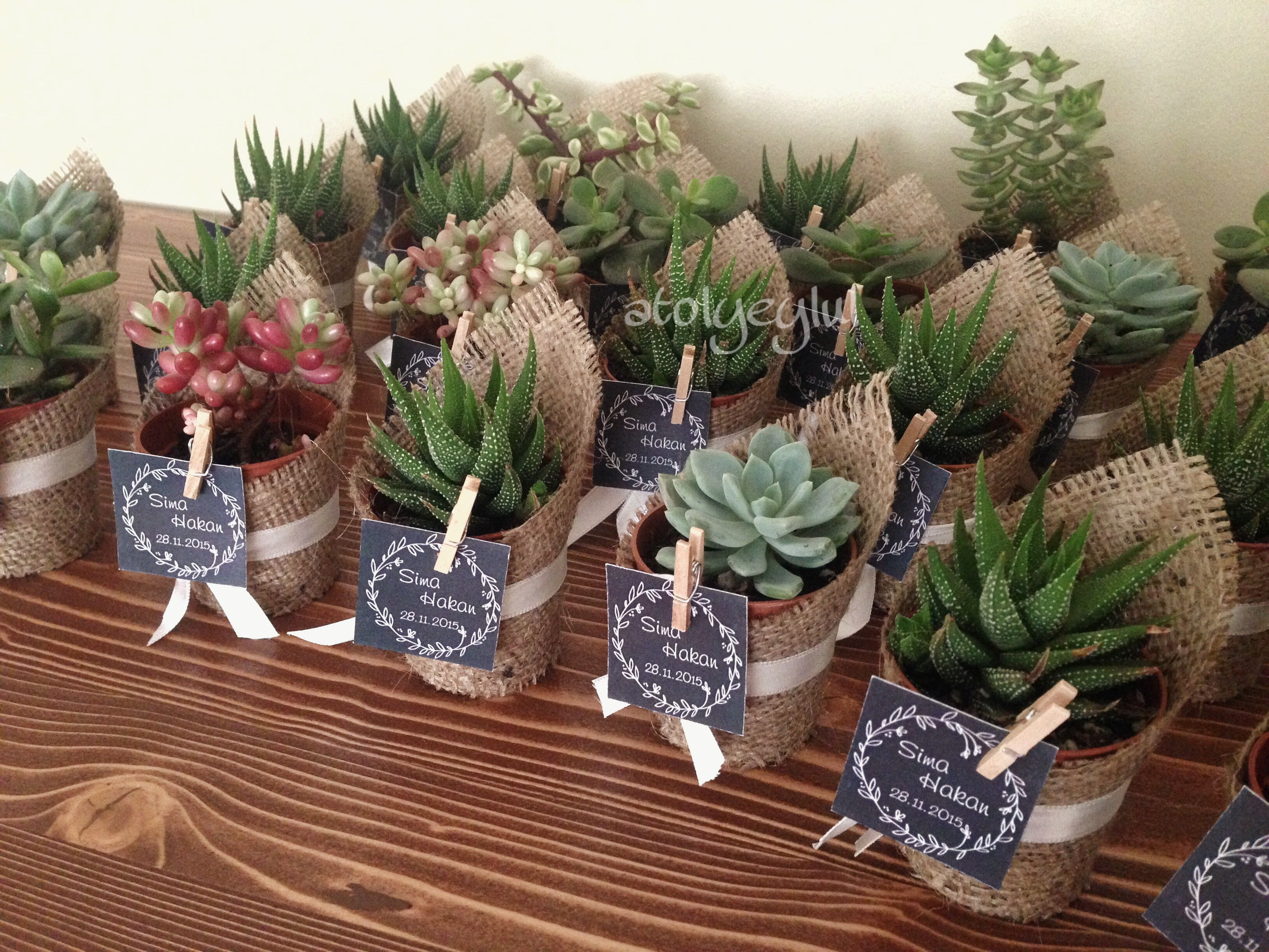 Recuerdos De Bautizo Con Cactus.Regalos Bautizo Cactus Regalos Bautizo Boda Y Recuerdos