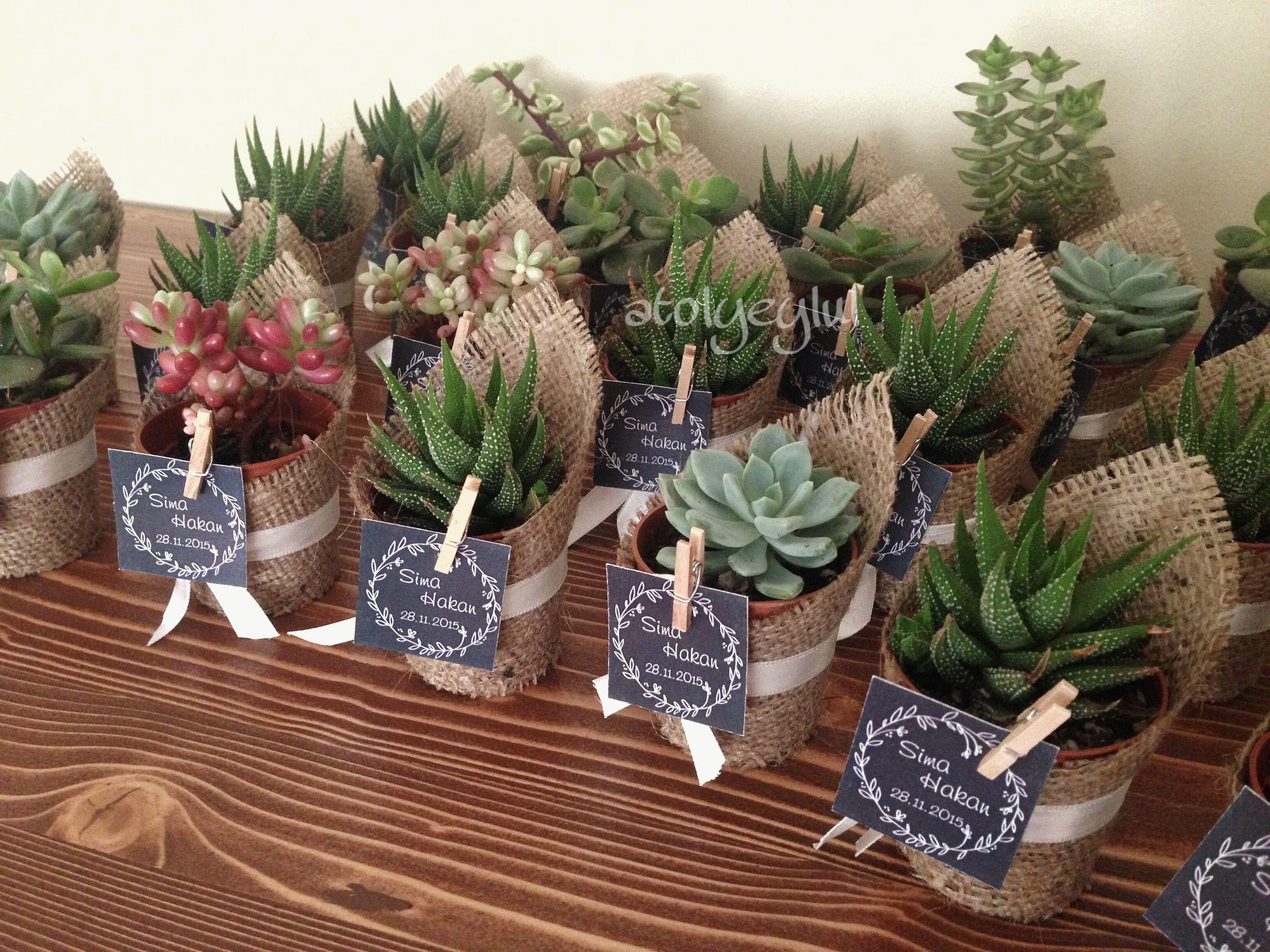 Mini Sukulent Mini Succulent Kaktus Cactus Wedding Favors Nikah Sekeri Nikah Hediyesi Babyshower By Atolyeylu Sukulent Nikah Sekerleri Dugun Sekerleri