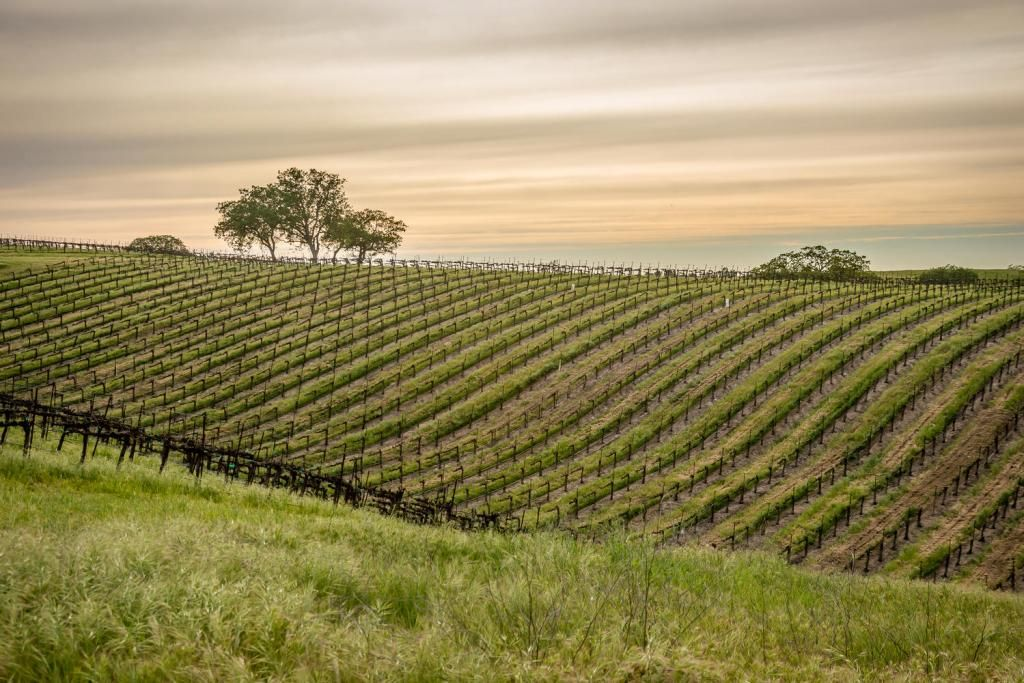 Paso Robles Vineyard and Home For Sale Nice Elevation w