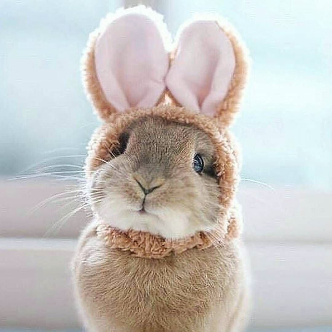 Pin by Amanda Conner on bunnies | Cute animals, Animals ...