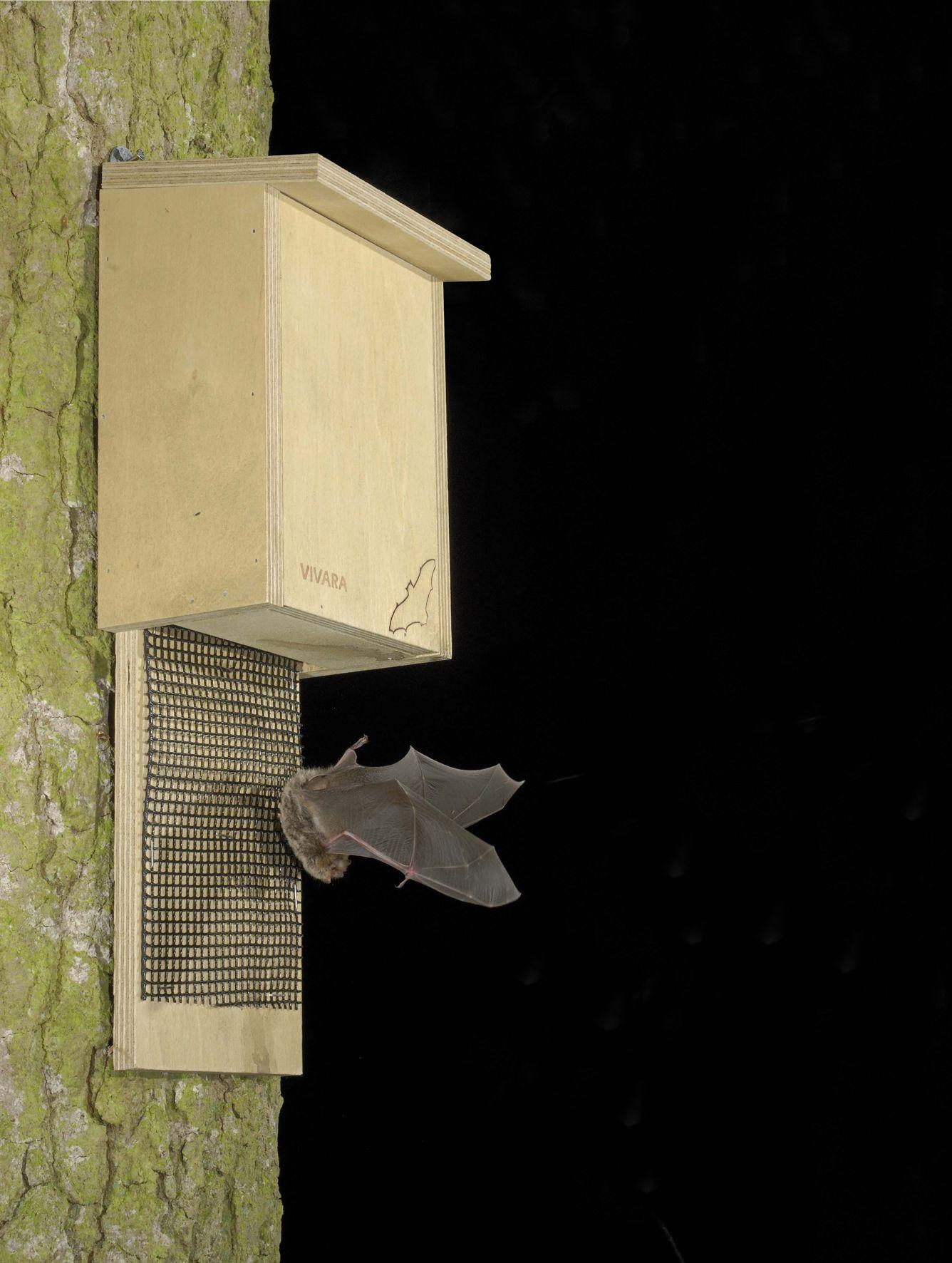 Bat box Bat houses, Bat house plans, Bat box