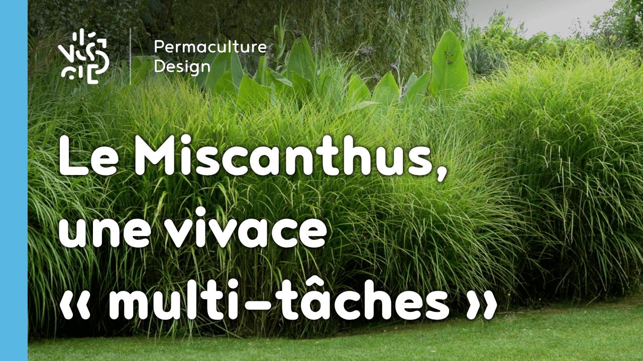 le miscanthus une plante vivace multifonction tr s. Black Bedroom Furniture Sets. Home Design Ideas