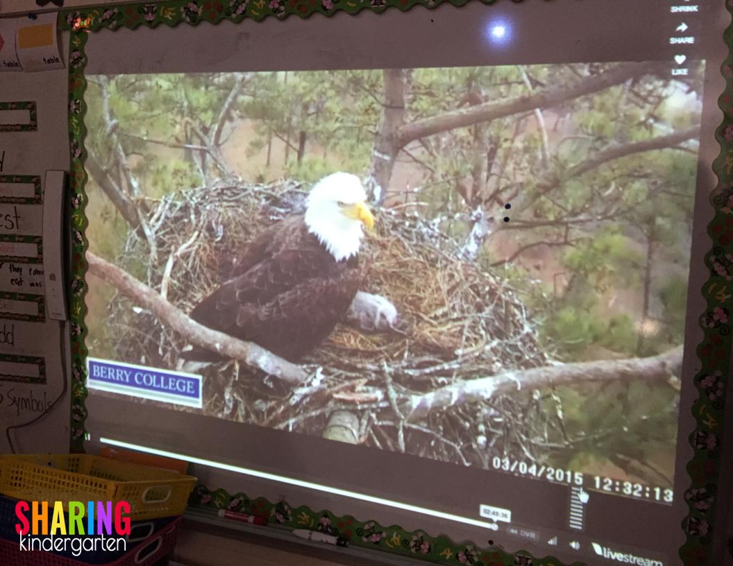 Watch a LIVE bald eagle