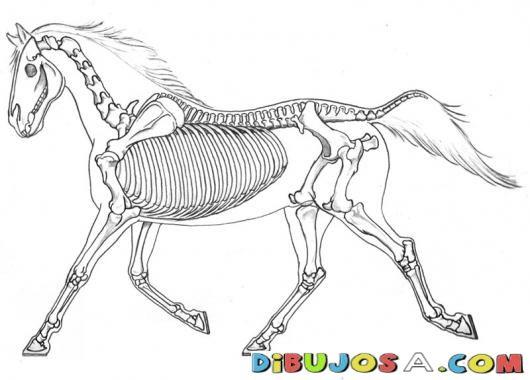 caballos al trote elevado - Buscar con Google | Horses | Pinterest ...