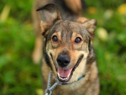 Chico Toronto Humane Society Dog Adoption Cute Animals Smart Dog
