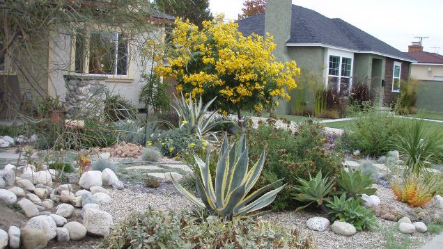 How To Convert Your Lawn Drought Tolerant Native Plants