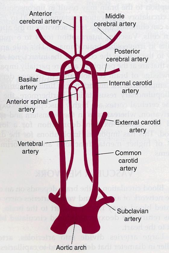 internal carotid artery branches | ... eyeball ocular muscles ...