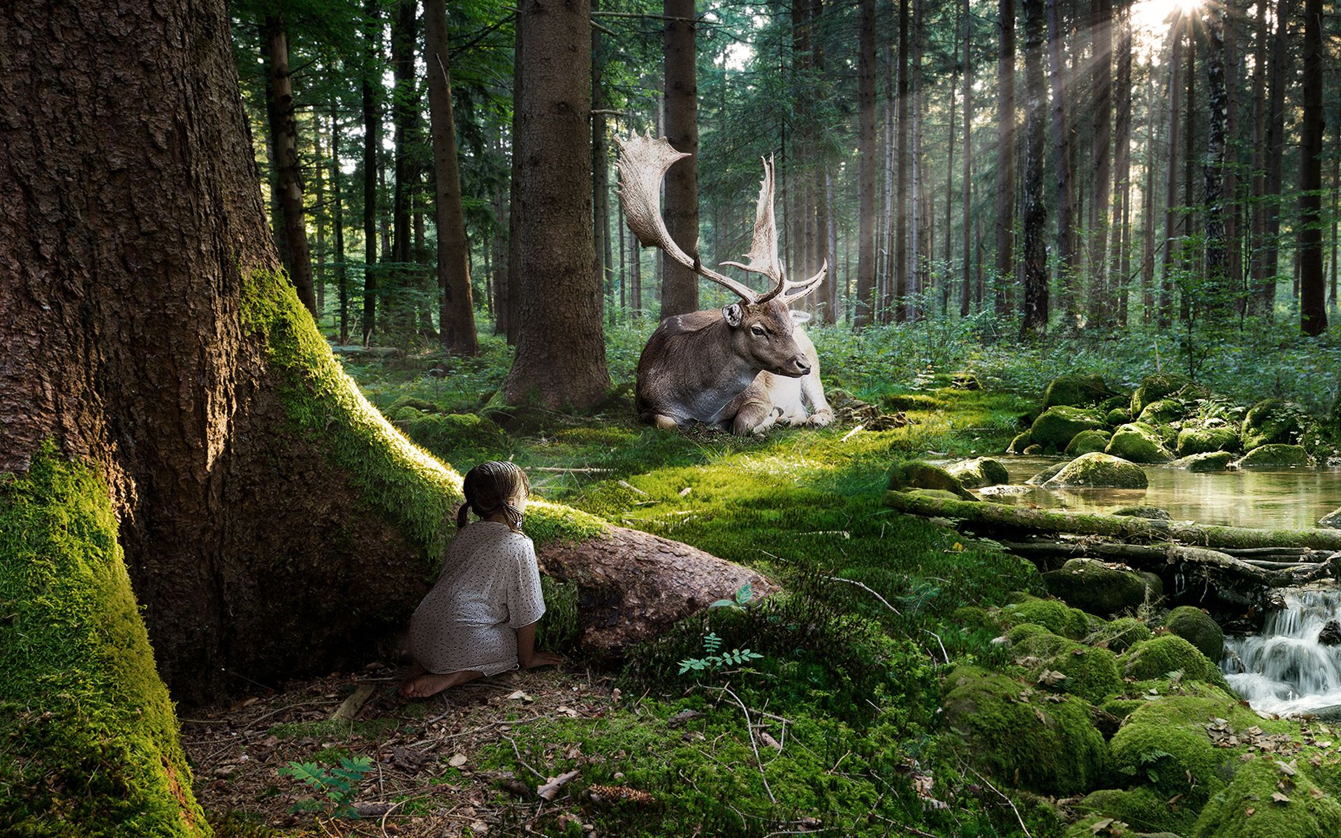 Fairytale Forest Wide Jpg 1920 1200 Fantasy Forest Forest Pictures Forest Wallpaper