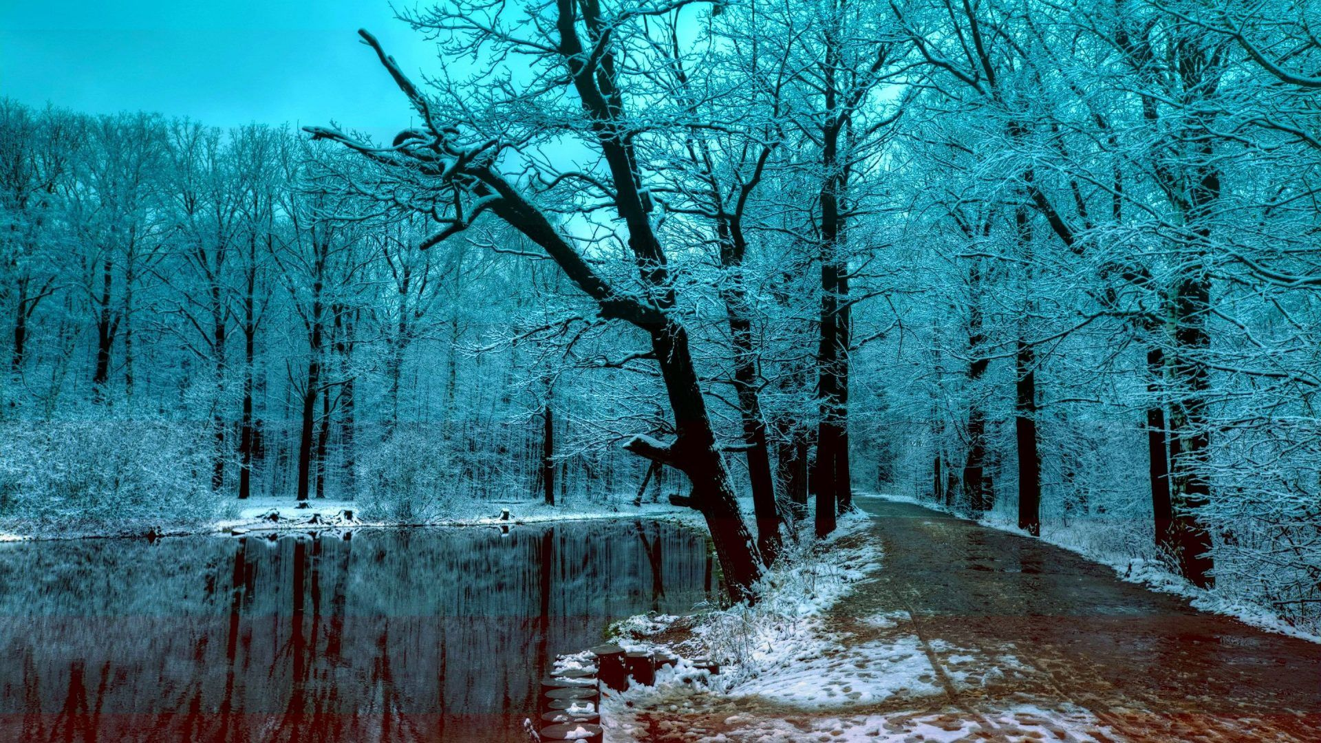 Download Wallpaper 1920x1080 Forest, Winter, Snow