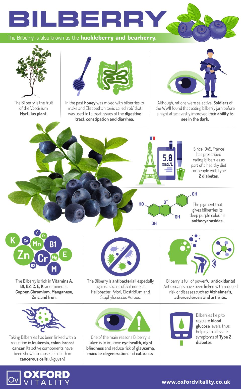 bilberry bilberry supplements bilberry tablets bilberry history