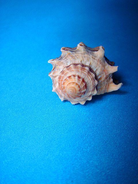 Caracol la base morfol gica de la espiral se puede - Estructura caracol ...