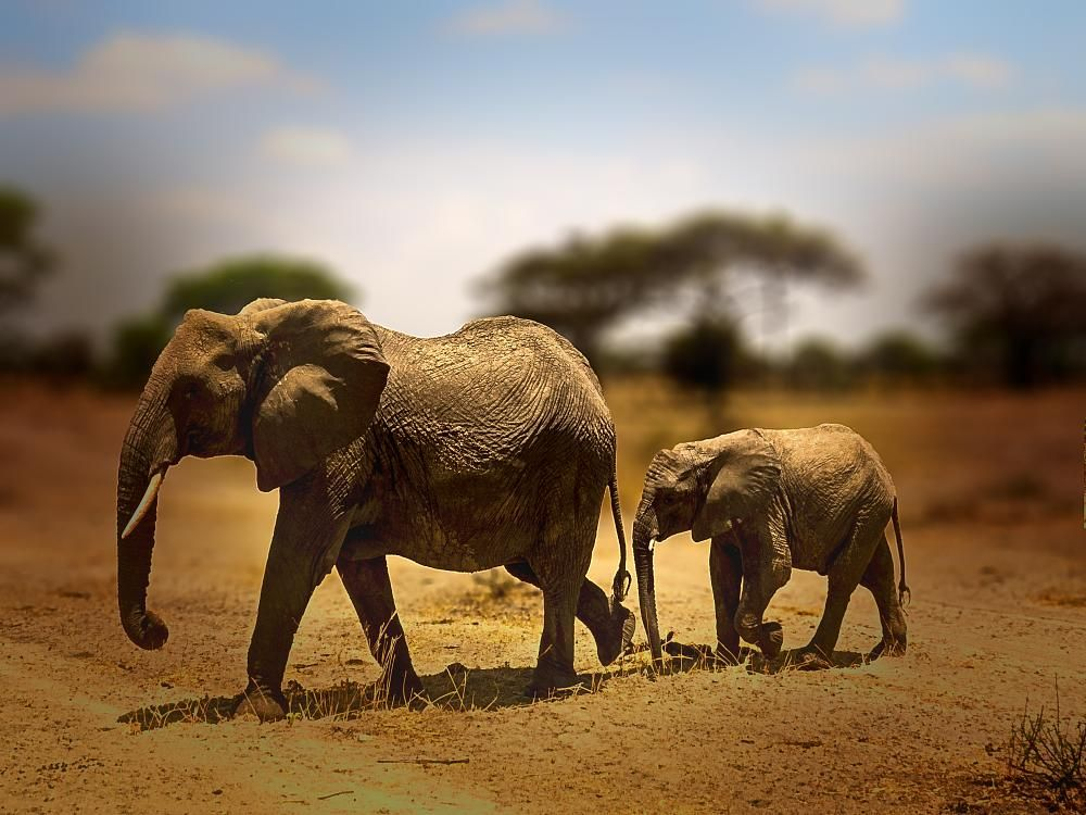 Mother and baby elephant by David Owen