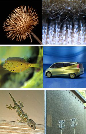 biomimicry ⬆ Selected by Atelier Avec Vue Biomimicry Examples, Future Systems, Organizational Design, Systems Biology, Biotechnology, Patterns In Nature, Make Design, Beach Chairs, Source Of Inspiration