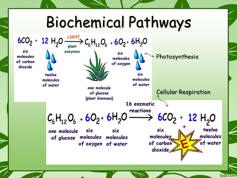 Biochemical Pathway Of Cell Respiration Flow Chart Luxury