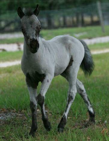 http://www.crittercreek.com/crittercreeknew/foals2008/IMAG026.JPG