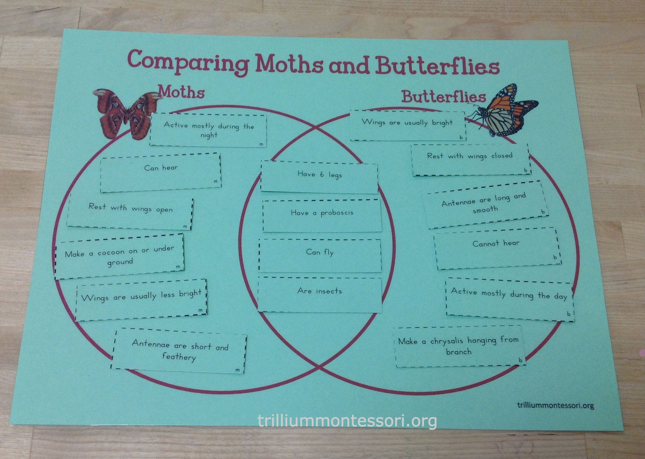 Learning Bugs Activities Preschool And