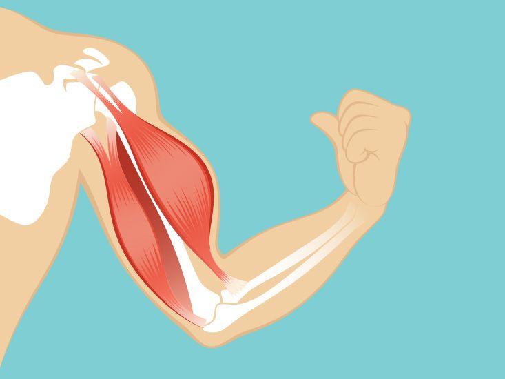 Sartorius Origin Function Definition Pinterest Muscles And