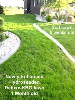 Enhanced Hydroseeding Micro Clover Lawn Renovation Sod Installation Diy Garden Furniture