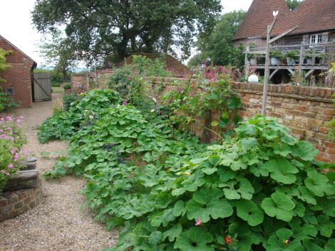 Rolling hills of gourds and squashes growing over lobster pot frames