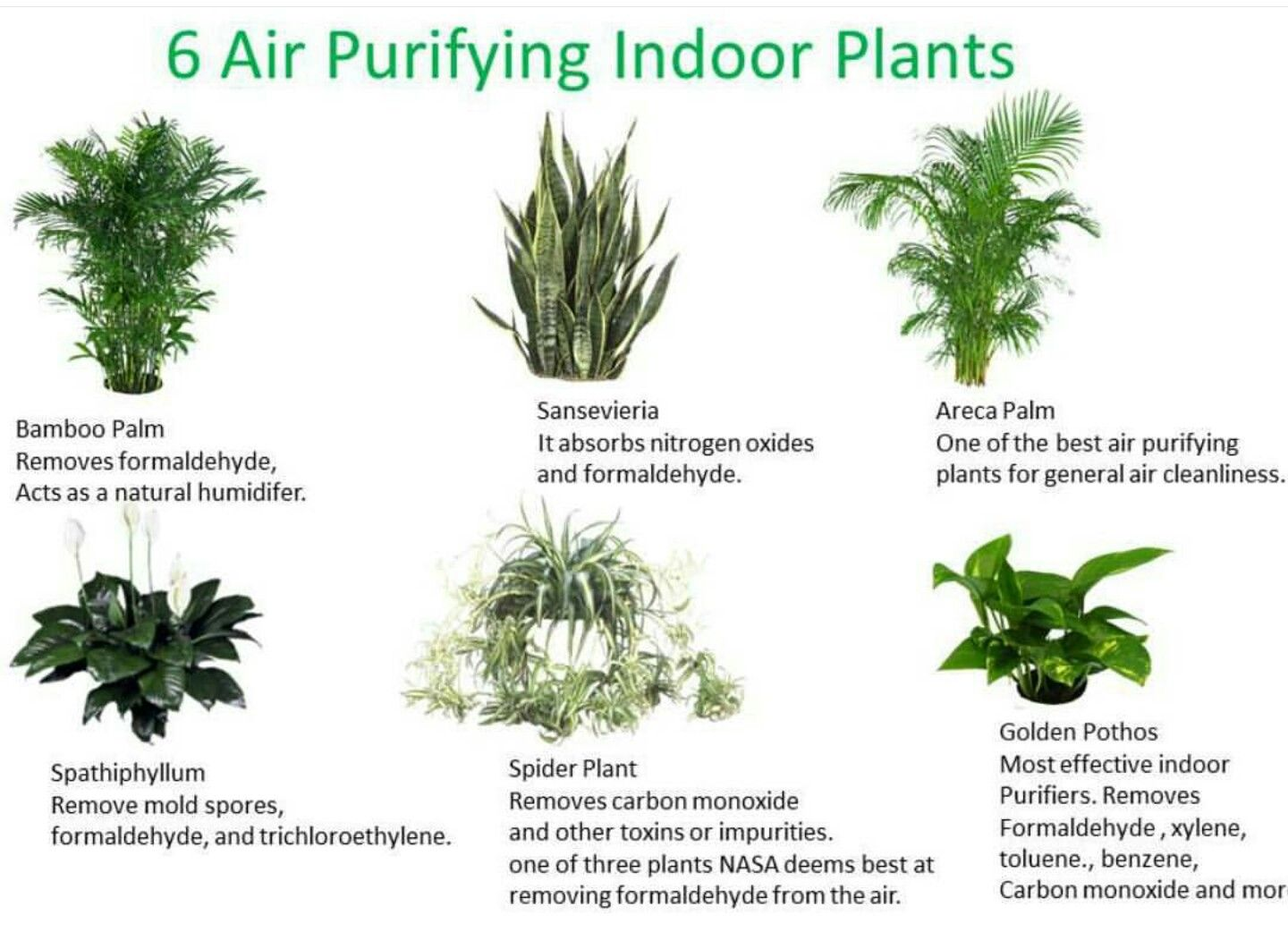 Three Essential Houseplants For Clean Indoor Air
