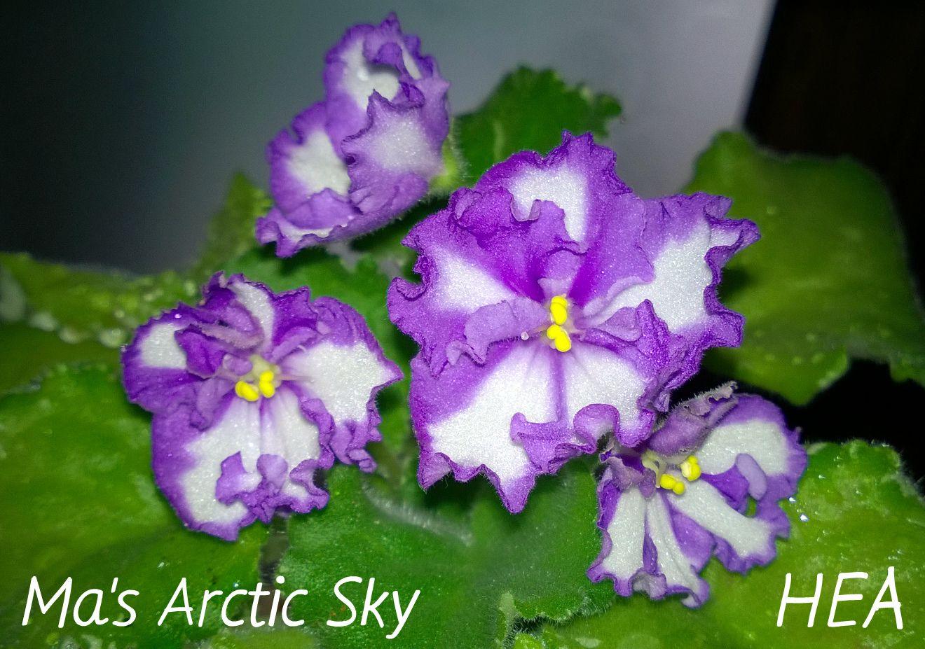 Ma's Arctic Sky