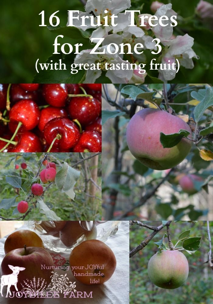 16 Fruit Trees For Zone 3 With Great Tasting Fruit Fruit Trees Fruit Garden Fruit Trees Backyard