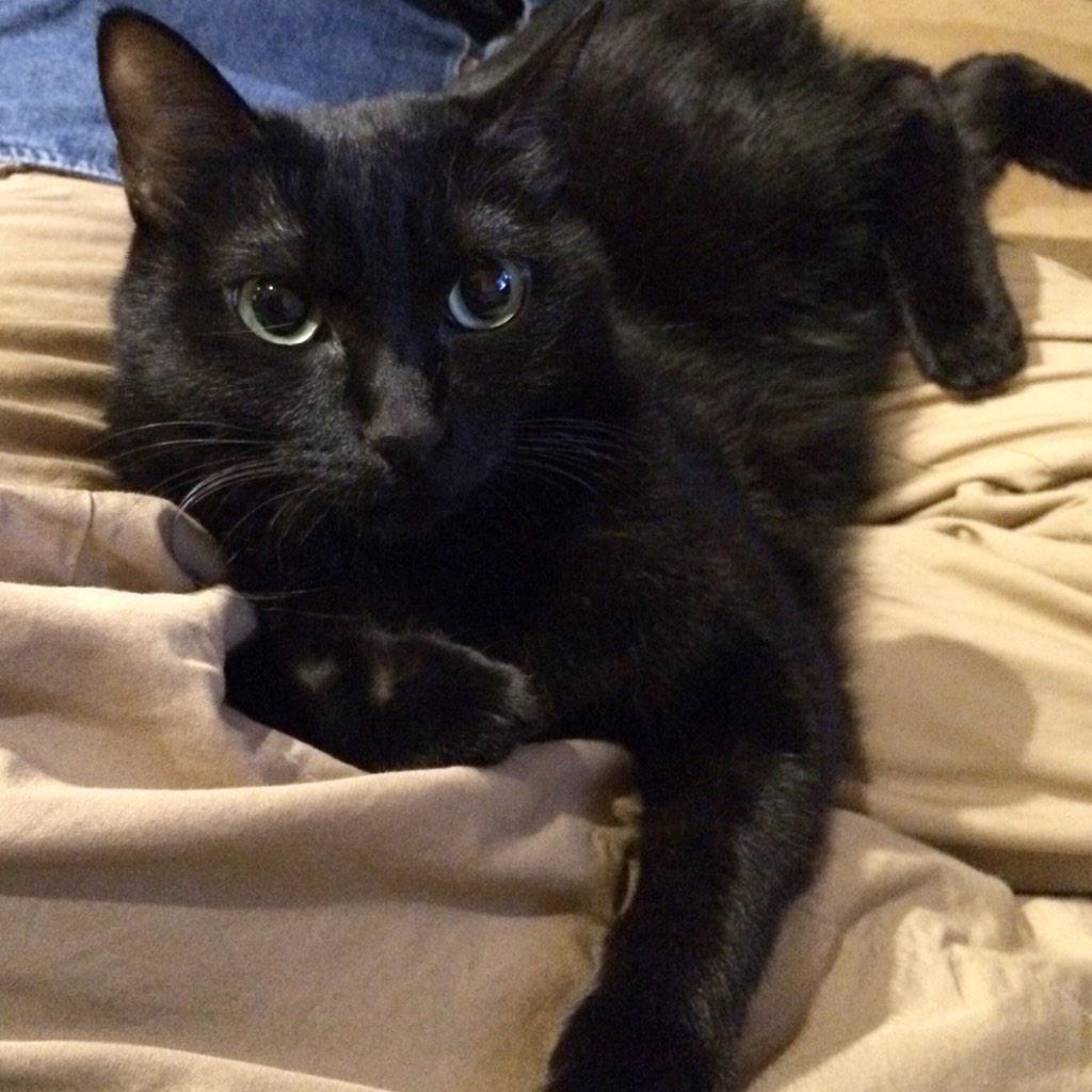 azukKi on Twitter Cats, Animals