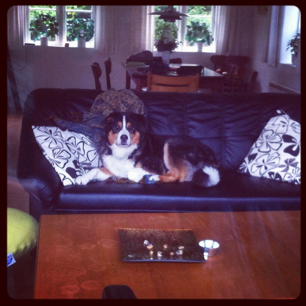 Hund und Sofa