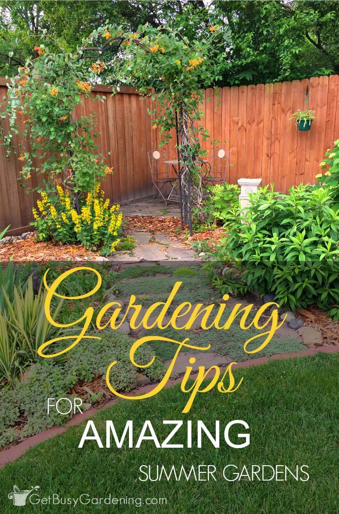 Gardening Tips For Amazing Summer Gardens | Gardens, Garden ideas ...