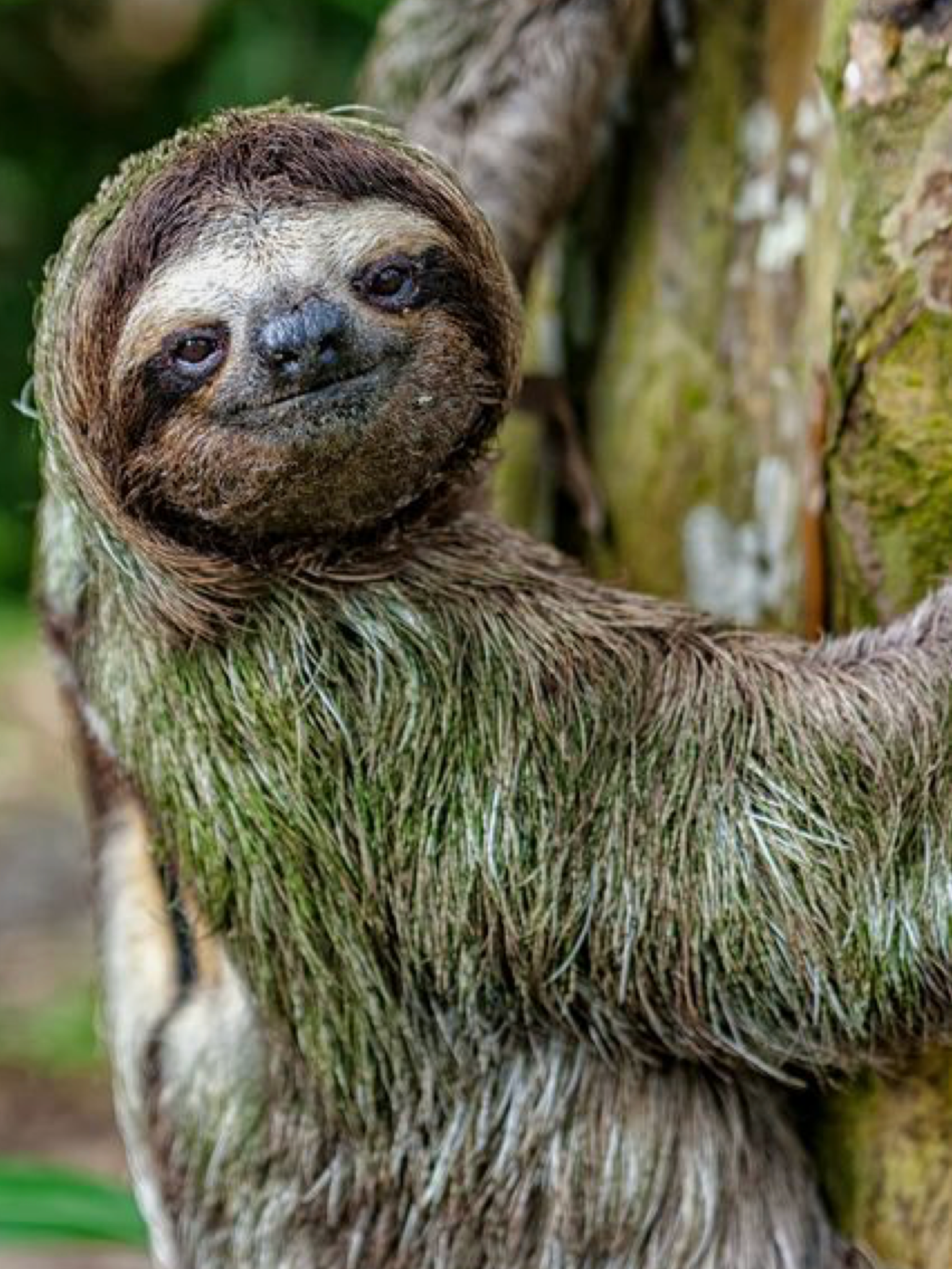 donthurrybehappy Sloth photos, Animals beautiful, Cute
