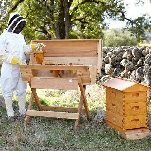 Top Bar Beehive | Williams-Sonoma | Top bar bee hive, Bee ...