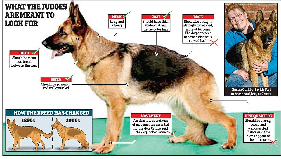 Lame Crufts Dog Should Ve Been Disqualified Says Rspca Dogs