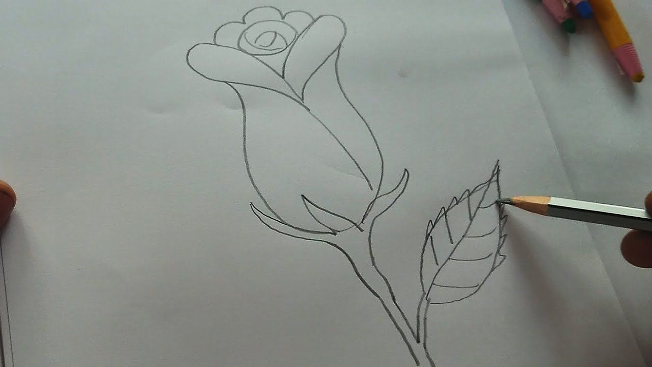 Rose Drawing By Pencil How To Draw A Rose Flower Rose Drawing Roses Drawing Rose Flower